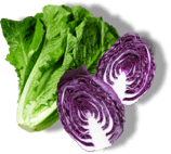 Green lettuce and purple cabbage representing fresh vegetables.