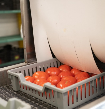 A tray of fresh tomatoes being sanitized at Brass City Regional Food Hub in Waterbury, Connecticut.